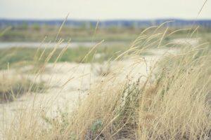 Marshland_opt